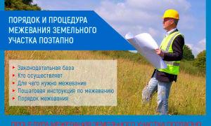 Порядок и процедура межевания земельного участка поэтапно