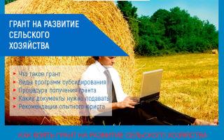 Грант на развитие сельского хозяйства: условия получения в 2019 году