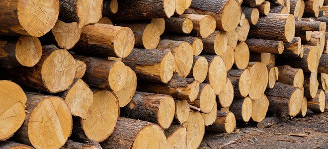 Как можно бесплатно получить лес от государства в 2021 году