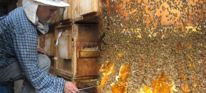 Помощь на развитие пчеловодства в Башкортостане