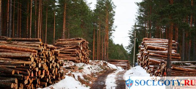 Как осуществляется выделение древесины для строительных потребностей